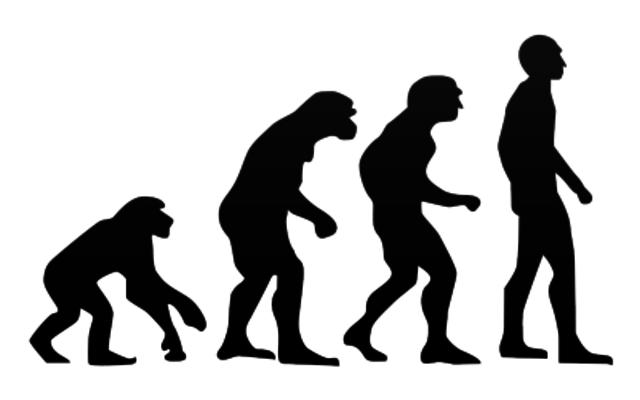 evolutionary perspective
