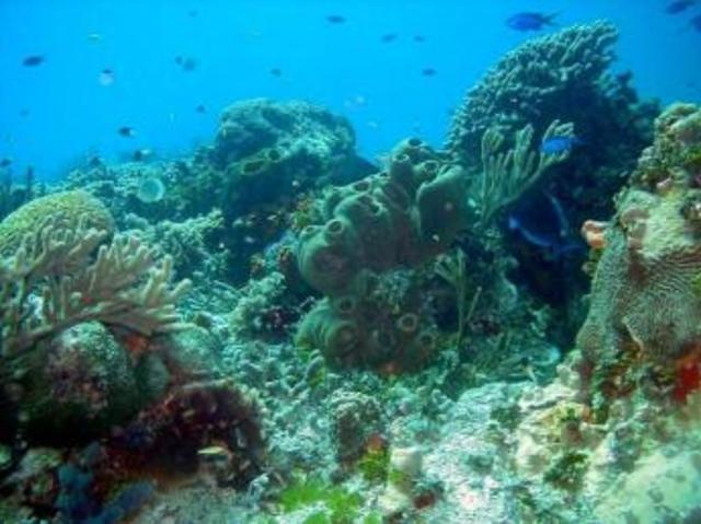 Costa Occidental de Isla Mujeres, Punta Cancun y Punta Nizuc