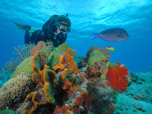 Arrecifes de Cozumel
