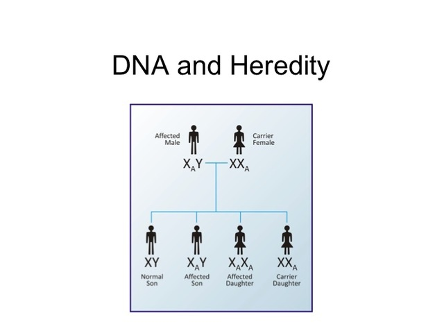 DNA and Heredity are Linked: 1944