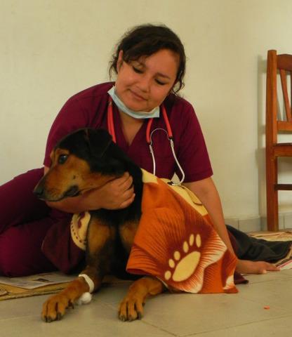 Avanza la campaña ALACUCHA de esterilización y tenencia responsable de mascotas