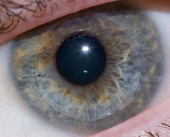 Growing a cornea: 1999