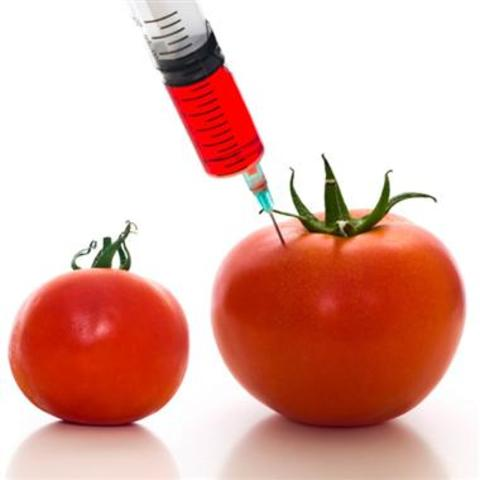 Tomato Farming Advancement