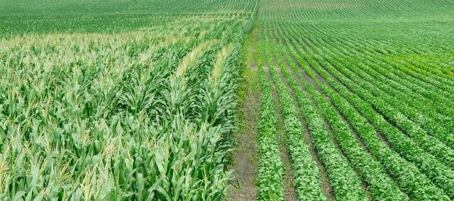 GMO Revolutionizes Farming