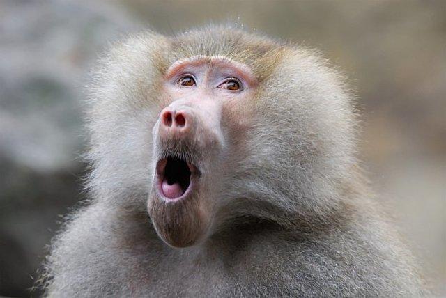 Baboon to Human Marrow Transplant