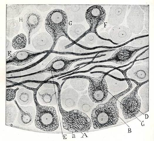 Protoplasma