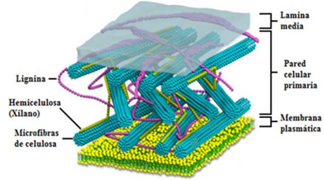 Fisiologia de las bacterias.