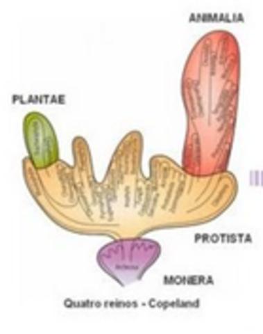 Clasificación de organimos