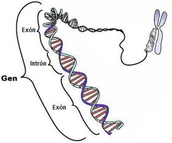 Síntesis de un gen