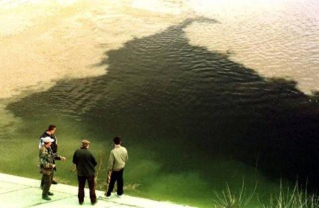 Baia Mare Cyanide Spill