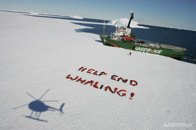 Greenpeace movement against whalers