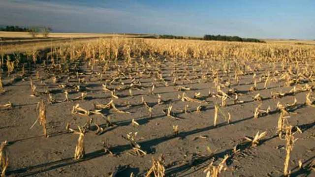 Biggest global crop failure in history