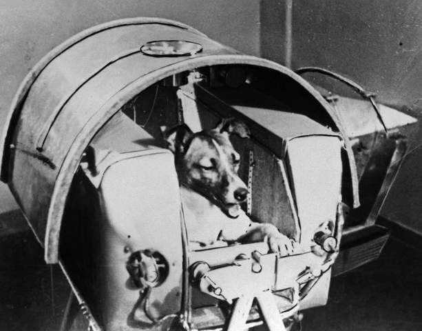 Launch first female dog into space