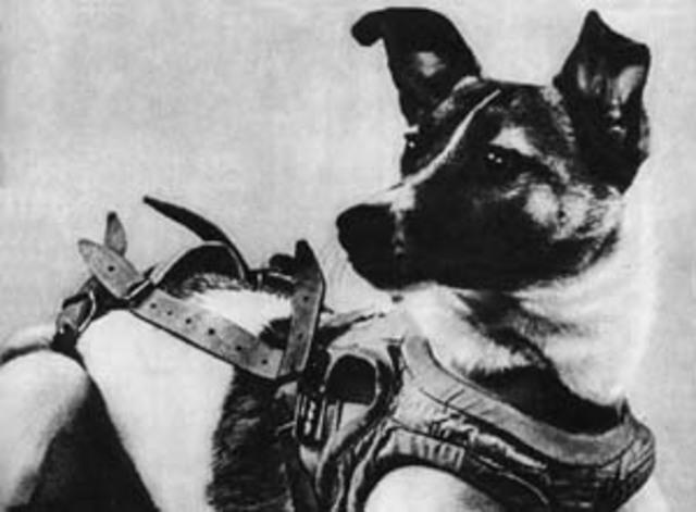 First animal launched into orbit, dog named Laika launched by USSR and did not return alive