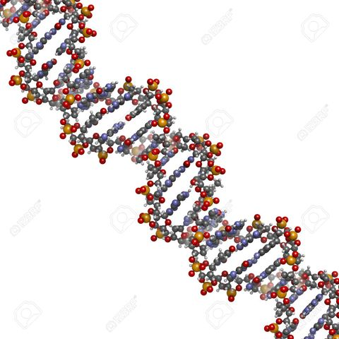 Genome Project Maps Human DNA Sequence