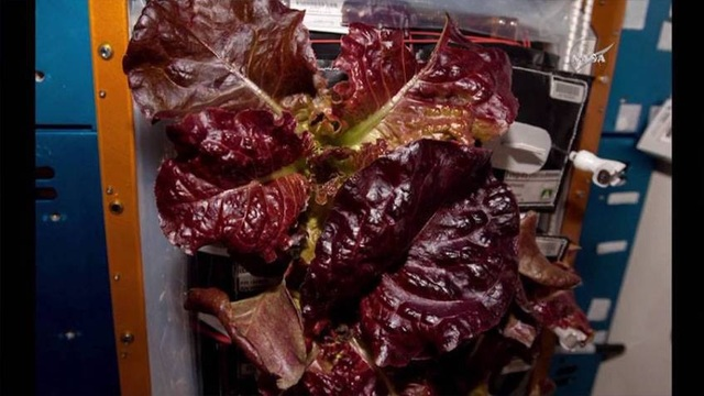 The first food grown in space is eaten