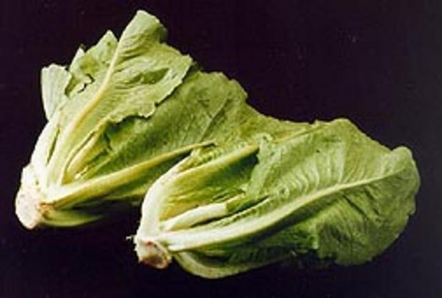 E. coli 0157:H7, Spokane Produce