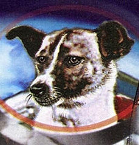social:Se mando el  primer satelite  tripulado por  la perra Laika