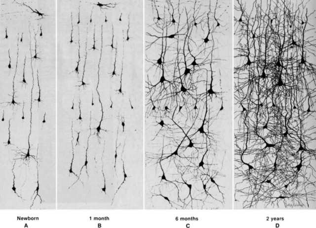 INFANT - Neuron network - physical/cognitive