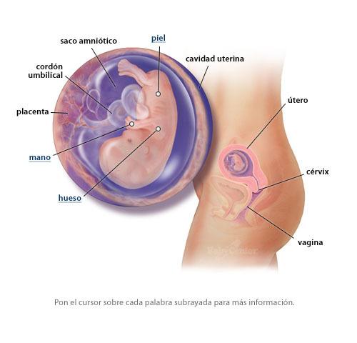 Semana 12 del embarazo