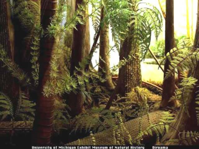 Carboniferous and Permain Period