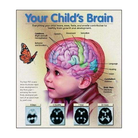 Early Years - Brain Growth - Physical