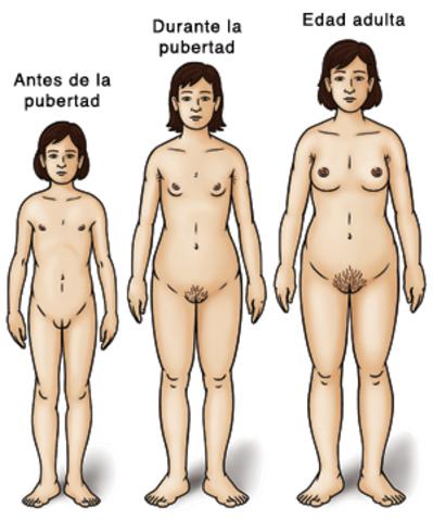 Desarrollo de la mujer