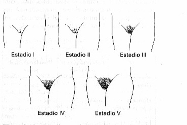 Desarrollo sexual y crecimiento del vello