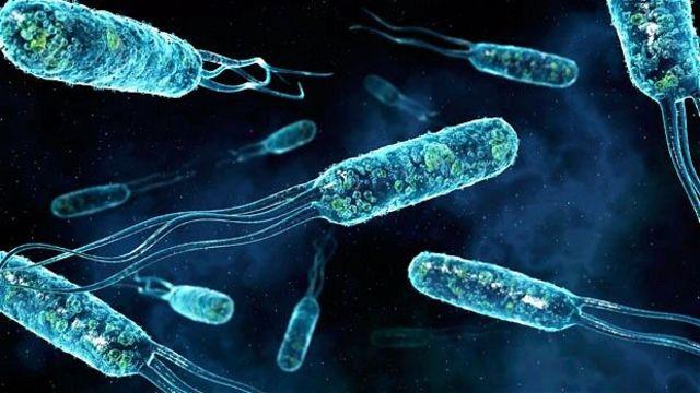 Открытие многих микроструктур живых и неживых объектов