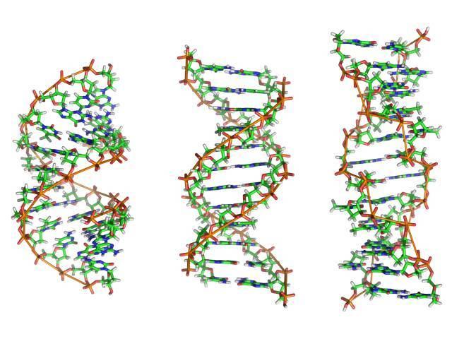 Открытие нуклеиновых кислот