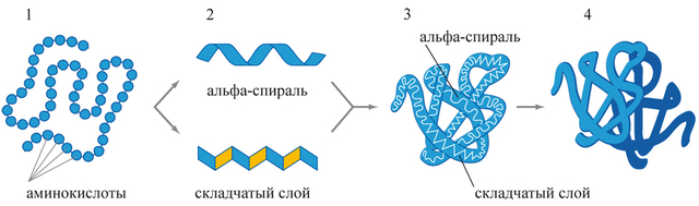 Установление состава белка