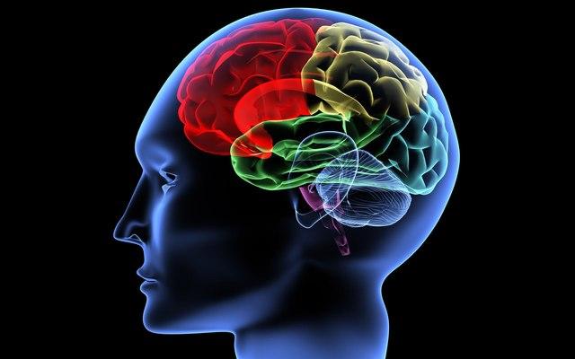 Открытие системы клеток в мозге