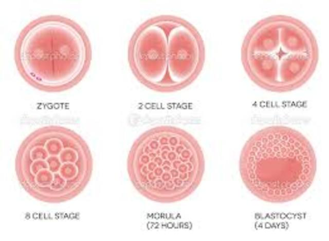 divicion celular