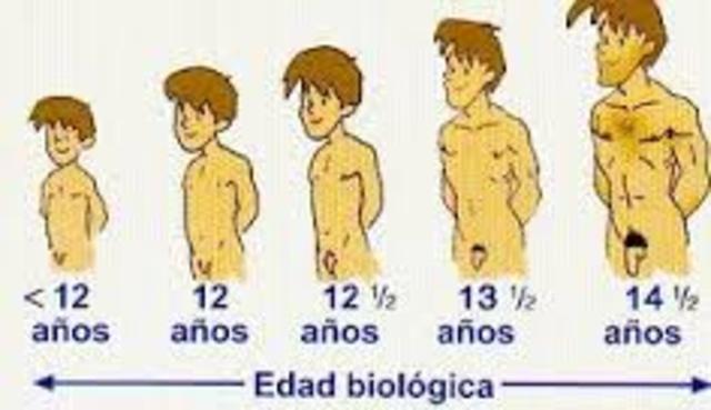 transcurso de la pubertad