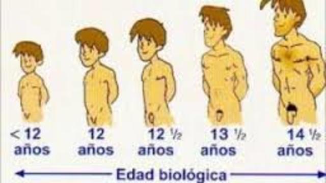 """12 años de edad """"pubertad en los hombres"""""""