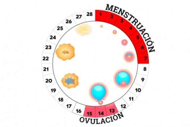Inicio del ciclo mestrual