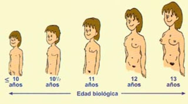 Pubertad. Cambios endocrinos