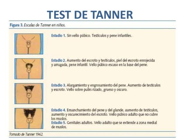 Desarrollo del niño segun Taner