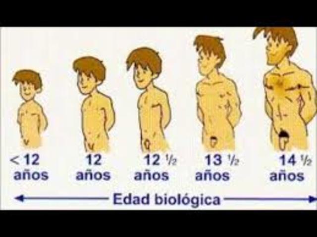 Caracteristicas de la Pubertad Masculina
