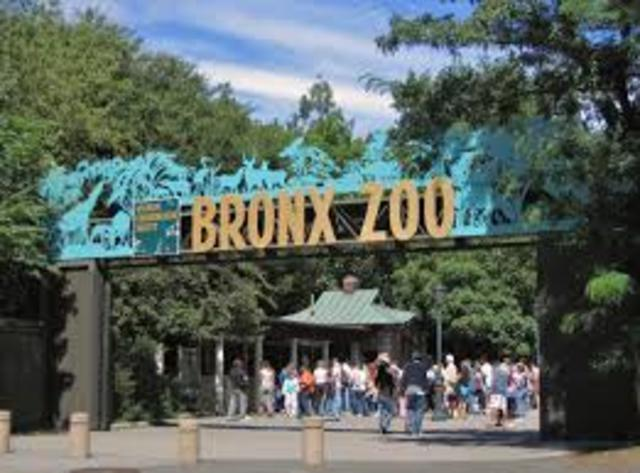 Visitando el zoológico del Bronx