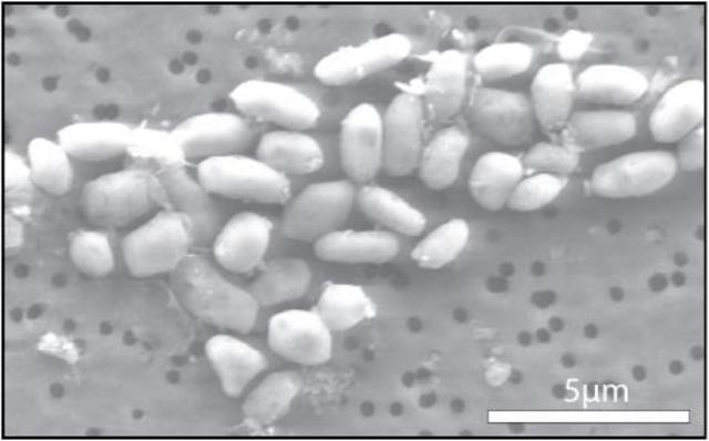 Micro-organisms discovered
