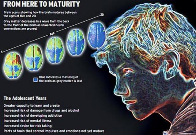 Adolescence - Brain Development - Cognitive