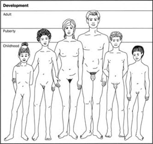 Adolescence: Puberty
