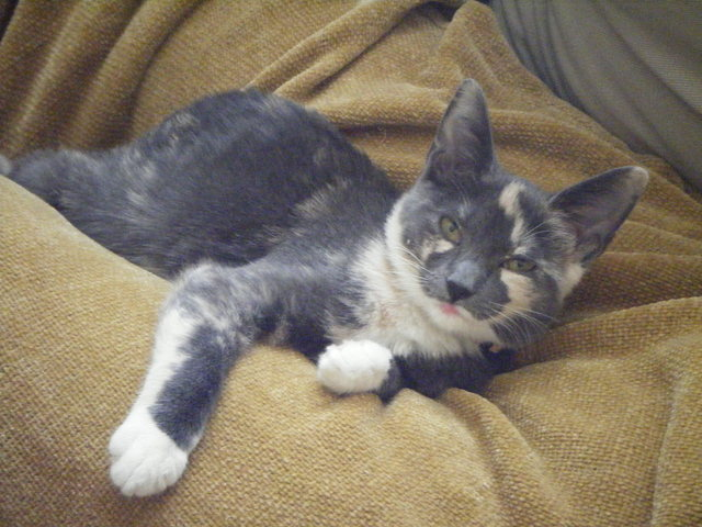 Adopted Mimi,psychosocial