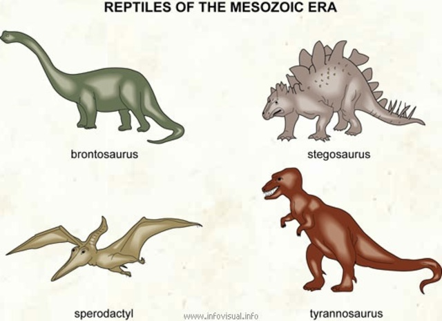 a Great variety in the kinds of dinosaurs