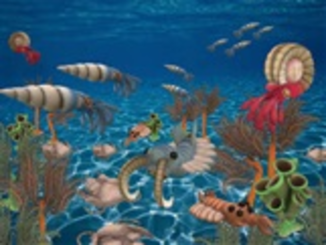 Abundance of marine invertebrates