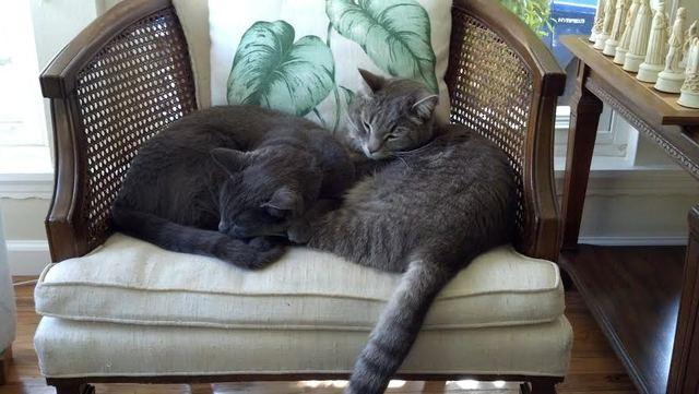 Obtuve gatos nuevos: e