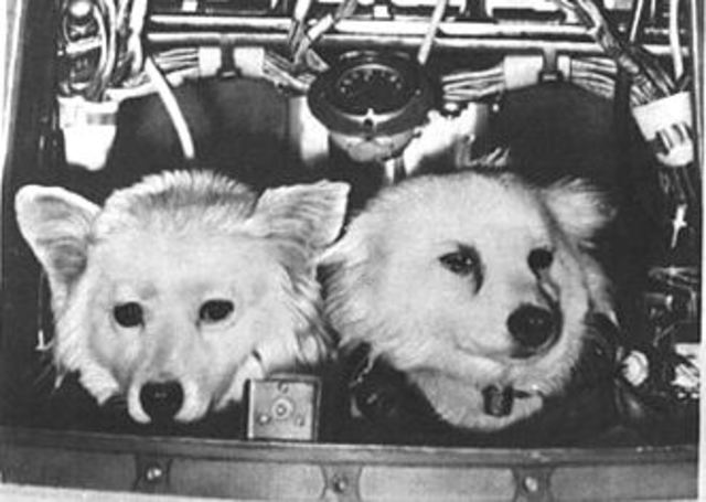 First Russian Animals in Space