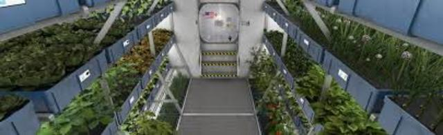 First food grown and eaten in space