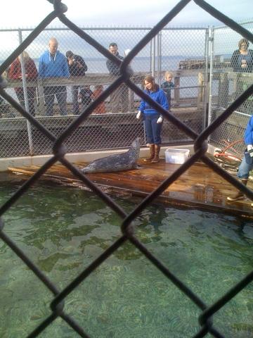 Visit to Seattle Aquarium